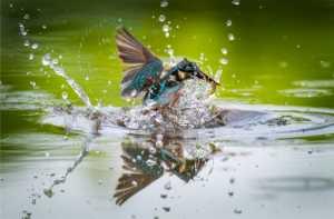 Circuit Merit Award e-certificate - Shaoqing Li (China)  Kingfisher Out Of Water