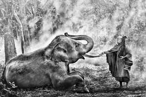 APAS Gold Medal - Say Boon Foo (Malaysia)  Elephant With Monk 4