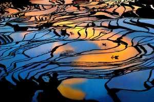 APU Gold Medal - Tong Hu (China)  Idyllic Light