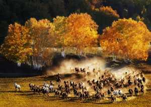 APU Honor Mention e-certificate - Hung Kam Yuen (Australia)  Legend Of Horse Herding