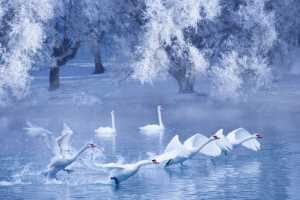 APAS Gold Medal - Dongping Yang (China)  Spread The Wings