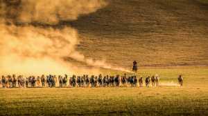 PhotoVivo Gold Medal - Yanhua Liang (China)  Horse Galloping