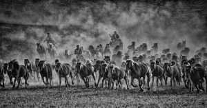 RPST Silver Medal - Lee Eng Tan (Singapore)  Mongol Horses Mono Charge
