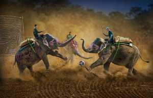 ICPE Gold Medal - Arnaldo Paulo Che (Hong Kong)  Chitwan Elephant Festival 1