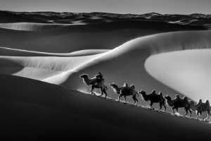 APAS Honor Mention e-certificate - Zhiyu Wu (China)  Camels10