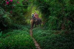 RPST Honor Ribbon - Kosit Jitpiroj (Thailand)  Love On Elephant Back