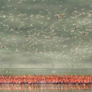 PhotoVivo Gold Medal - Lianjun Quan (China)  Red Party