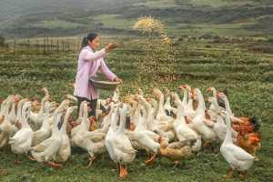 PhotoVivo Gold Medal - Zhihong Liu (China)  Feed