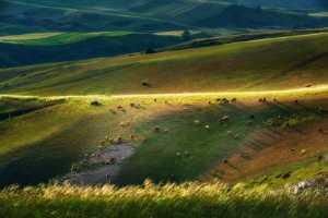 APAS Gold Medal - Jiangshan Li (China)  Natural Pasture