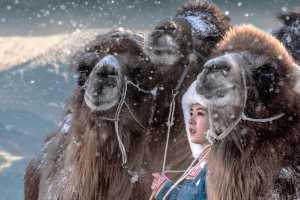 Best 100 Collection - Ovi D Pop (Romania)  Camel Toe 03