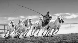 Circuit Merit Award e-certificate - Xiping An (China)  Shepherd And Seven Horses 3
