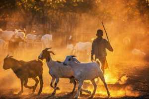 PhotoVivo Gold Medal - Xiuli Wang (China)  Shepherd Boy