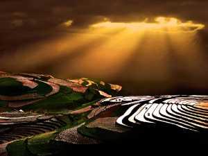 PSA HM Ribbons - Tong Hu (China)  Gold Sprinked Warth
