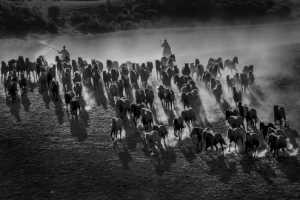 APAS Gold Medal - Shuzhou Zhang (China)  Galloping Horses