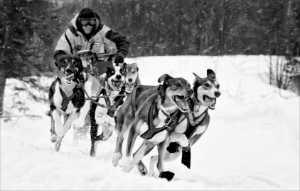 APAS Gold Medal - Phillip Kwan (Canada)  Yellow Dog Sled Racer