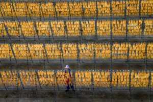 APAS Gold Medal - Haining Li (China)  Harvest