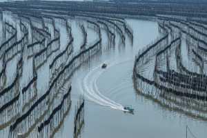 APAS Gold Medal - Zhi Zhao (China)  Boat In The Purse Net