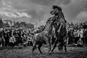PhotoVivo Gold Medal - Aizhen Jiang (China)  Horse Fight