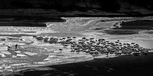 PhotoVivo Gold Medal - Aimin Zhu (China)  Mudflat Herding