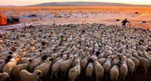 GTPC Merit e-certificate - Mingyou Zhang (China)  Song Of Herding Sheep