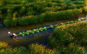 Circuit Merit Award e-certificate - Le  Chau Dao (Vietnam)  Fulling Sedge On The River -  16
