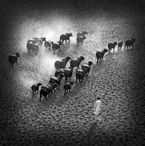 PSA HM Ribbons - Sami Ur Rahman (United Kingdom)  The Long Walk Home