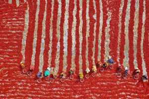 APU Gold Medal - Azim Khan Ronnie (Bangladesh)  Drying Red Chilies