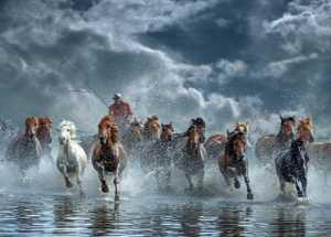 Circuit Merit Award e-certificate - Yinghua Min (China)  Horses Run The Tide