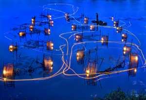 APU Gold Medal - Tong Hu (China)  Shrimp Pond Night