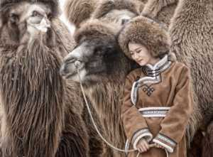 APU Gold Medal - Jijun Sun (China)  Camel And Girl