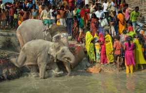 Circuit Merit E-cert - Debashis Tarafder (India)  Bathing