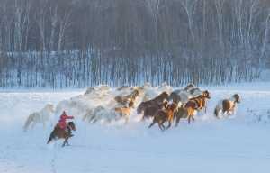 Circuit Merit Award e-certificate - Youdong Deng (China)  Urge Horses Forward 2