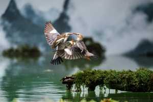 PhotoVivo Gold Medal - Yakang Ai (China)  Kiss In Air