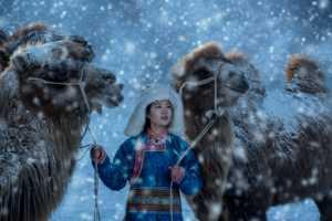 Circuit Merit E-cert - Leif Alveen (Denmark)  Camels And Girl 008