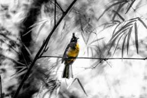 Circuit Merit Award e-certificate - Waranun Chutchawantipakorn (Thailand)  Yellow Bird