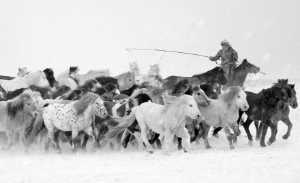 PhotoVivo Gold Medal - Mingyou Zhang (China)  Drive A Horse