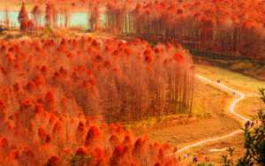 APAS Gold Medal - Gaoli Sha (China)  Red Forest