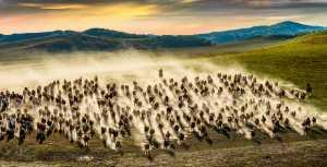 APAS Honor Mention e-certificate - Yining Yang (China)  Ten Thousand Steeds Gallop