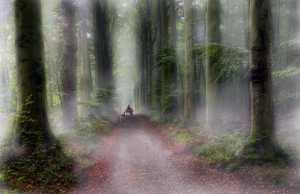 RPST Honor Ribbon - Leon Van Ham (Belgium)  Magic Forest