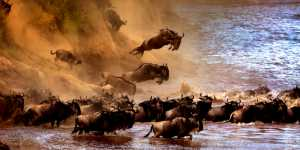 APU Honor Mention E-Certificate - Sergey Agapov (Russian Federation)  The Great Migration Of Wildebeest 2