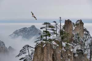 PhotoVivo Honor Mention e-certificate - Jiashun Feng (China)  Flying