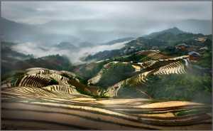 APU Gold Medal - Thong Tran (USA)  Terrace 721
