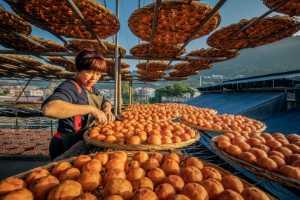 PhotoVivo Gold Medal - Rongmao Yang (China)  Persimmon Festival 1
