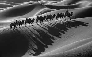 APU Honor Mention e-certificate - Katherine Wong (Canada)  Camel Caravan 2