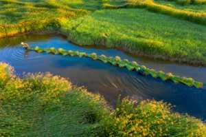 ICPE Honor Mention e-certificate - Le Chau Dao (Vietnam)  Fulling Sedge On The River -  12