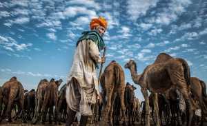 PhotoVivo Gold Medal - Liu Xiu (China)  Old Camel Man