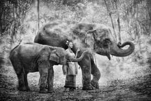 Circuit Merit Award e-certificate - Say Boon Foo (Malaysia)  Lady Love Elephants