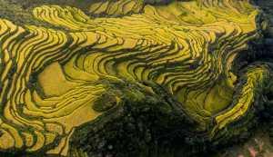 APAS Honor Mention e-certificate - Jianxing Jiang (China)  Golden Terraces