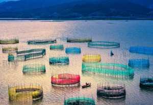 PhotoVivo Gold Medal - Rongmao Yang (China)  Maze Over The Sea