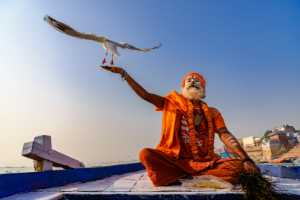 APAS Honor Mention e-certificate - Anitha Mysore (India)  The Godman And The Gull